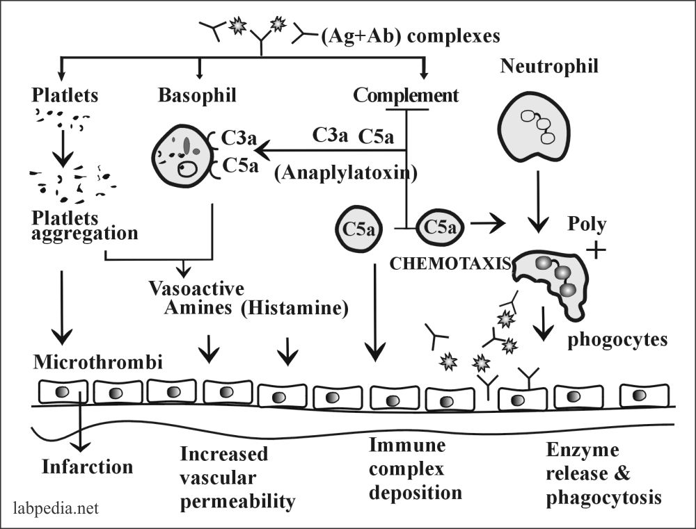 Fig 109: Summary of the Type III Hypersensitivity Reaction