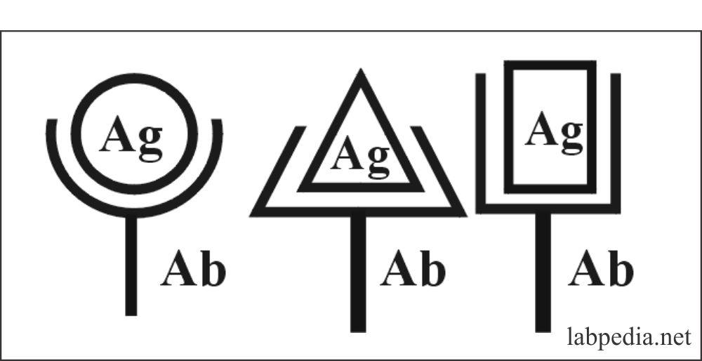 Antigen antibody combination