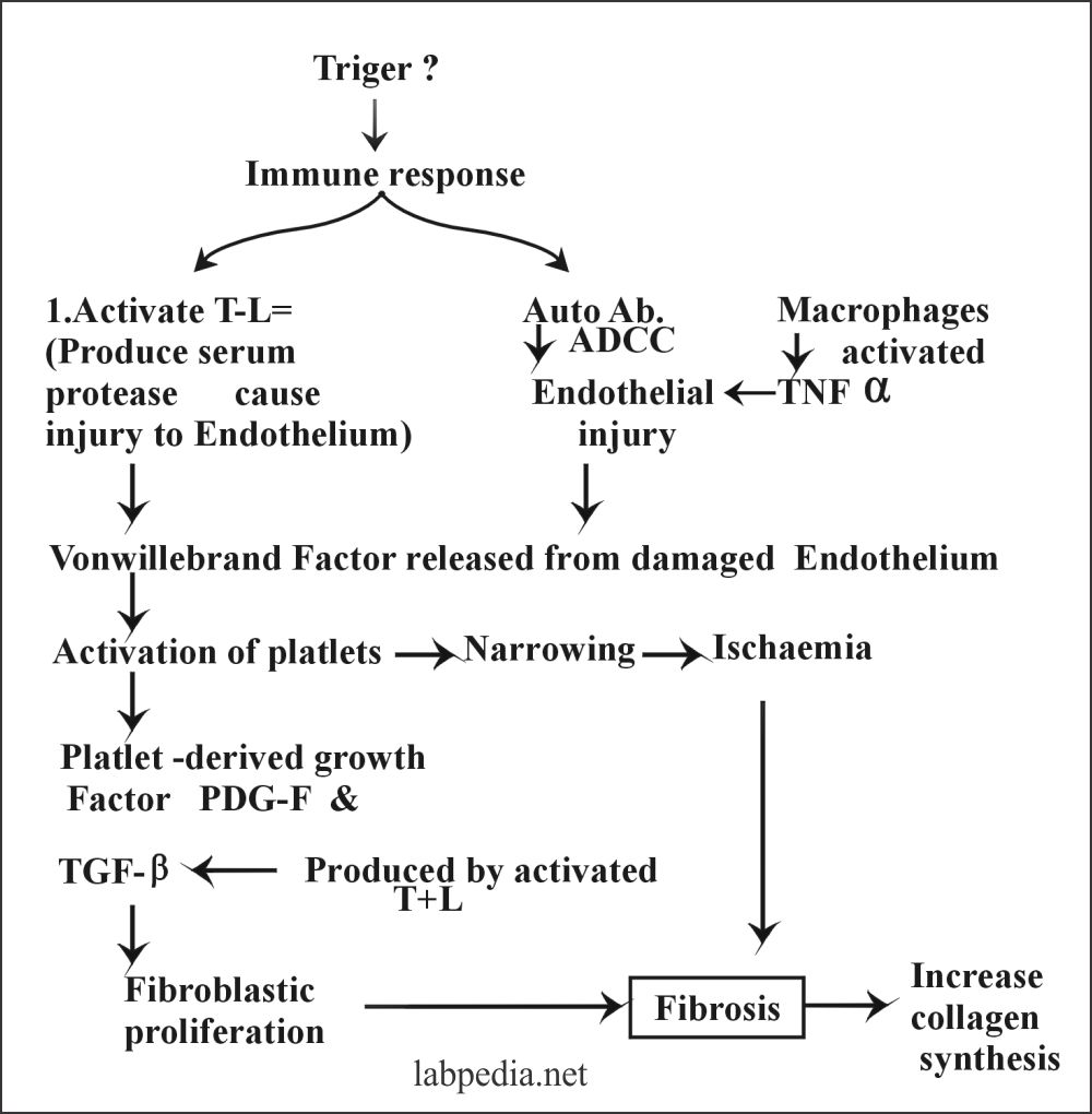 Fig 143: Mechanism of Fibrosis In PSS