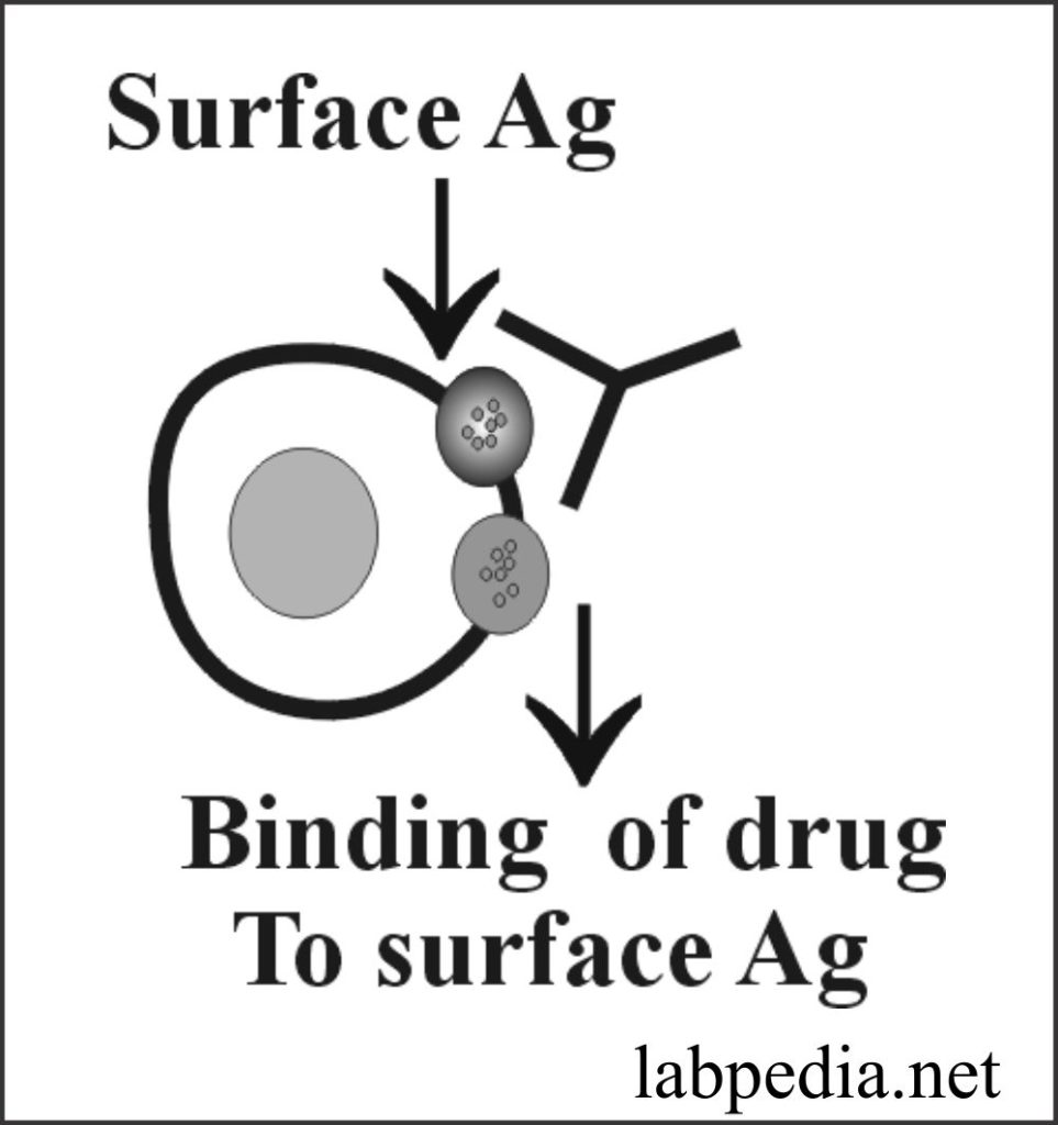 Fig 150: Drug binding the Red Blood cell