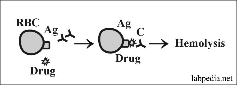 Fig 151: Drugs act as Haptens