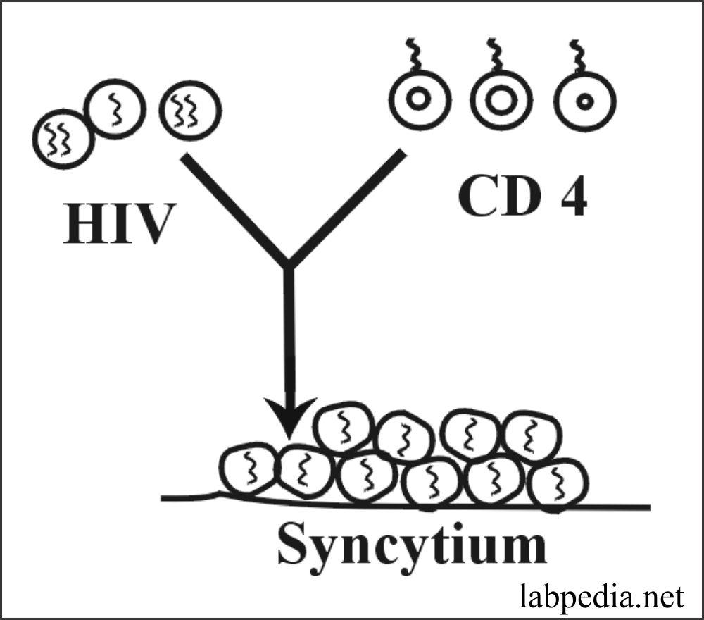 Fig 160: HIV forms Cyncytium