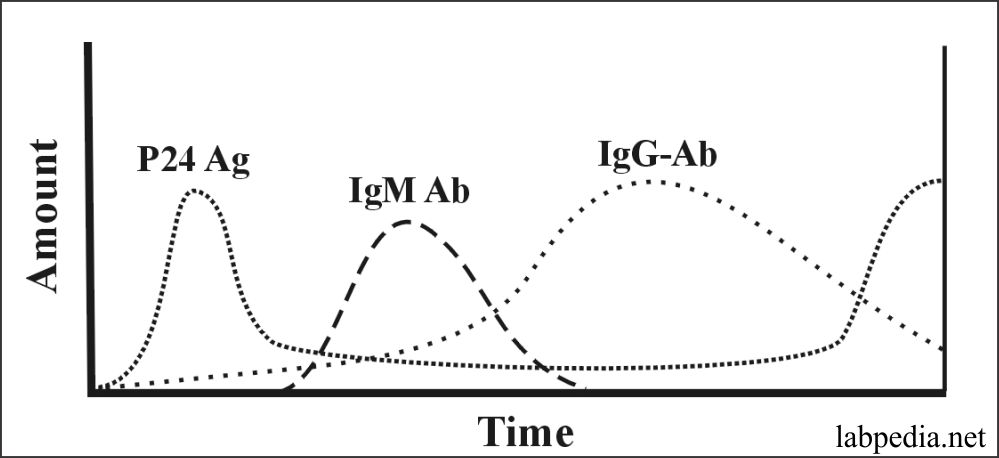Fig 162: Typical Serological Profile of HIV