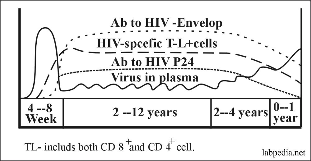 Fig 163: Serological and Immune Response to HIV