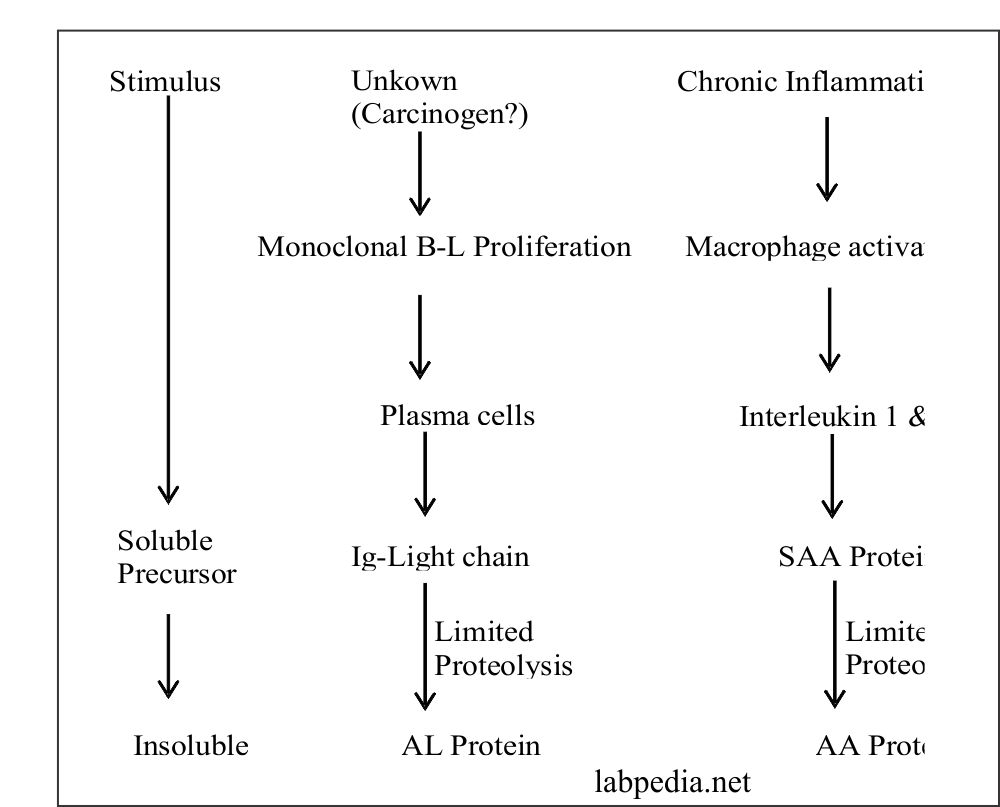 Fig 177: Pathogenesis of Amyloidosis