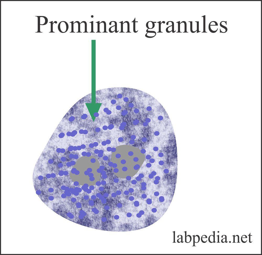 Basophil characteristic granules
