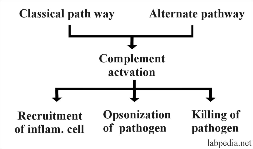 Fig 70 A: Outcome of Complement activation