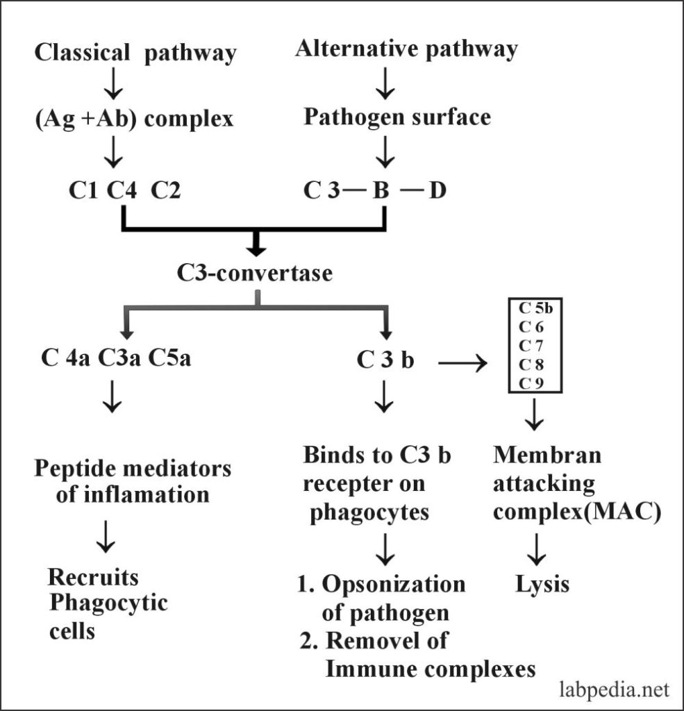 Fig 70: Summary of Classical and Alternative pathways