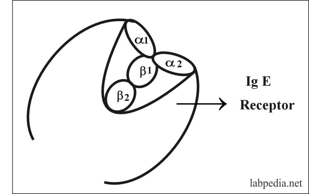 Fig 88: IgE Receptor