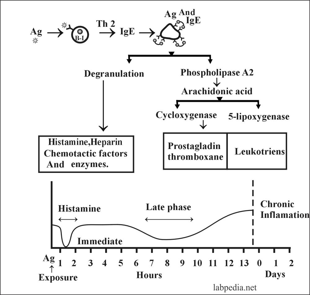Fig 93:Summary of the Type 1 Hypersensitivty reaction