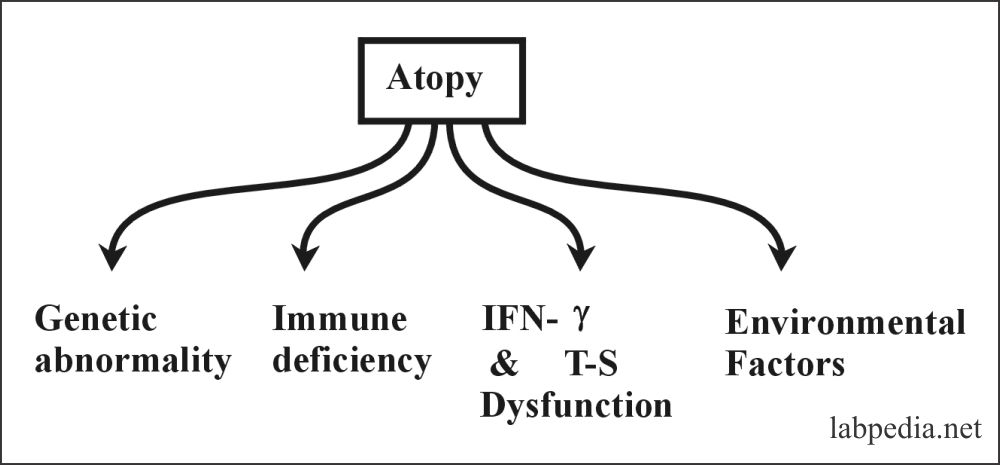 Fig 95: Atpoy possible mechanism