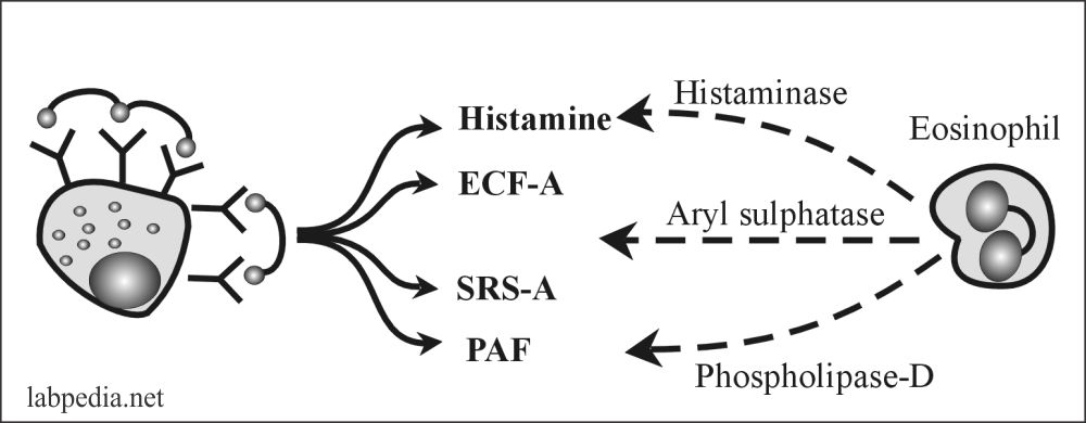 Fig 96: Nature check mechanism of Type 1 Hypersensitivity reaction