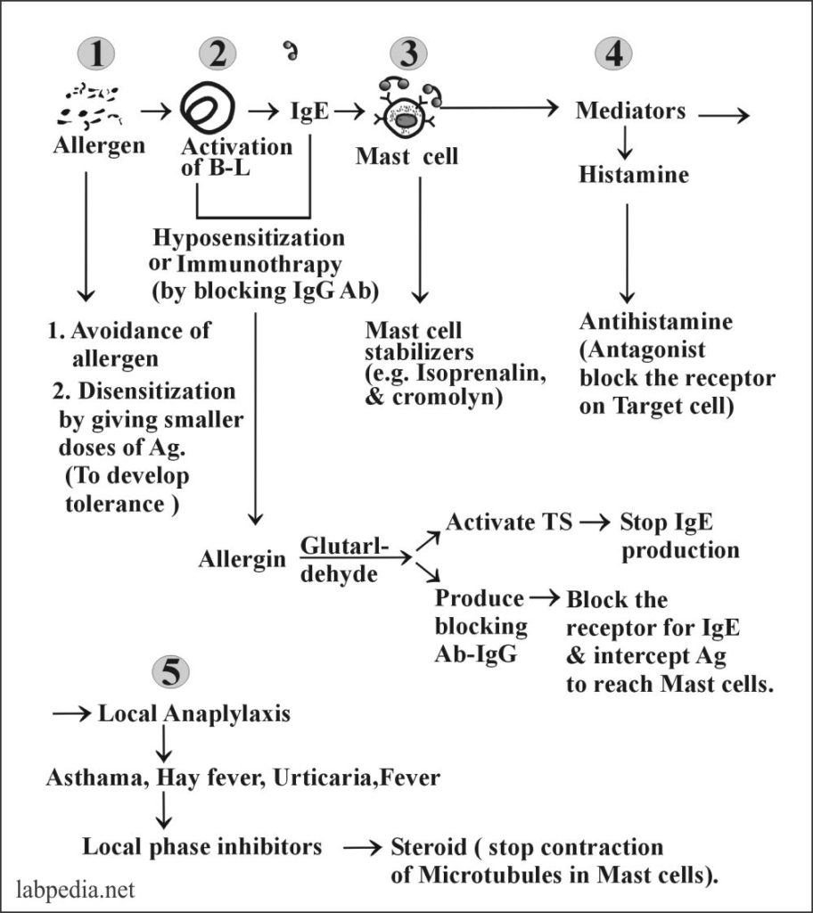 Chapter 11: Hypersensitivity Reactions, Type 1 Hypersensitivity reaction, Anaphylaxis
