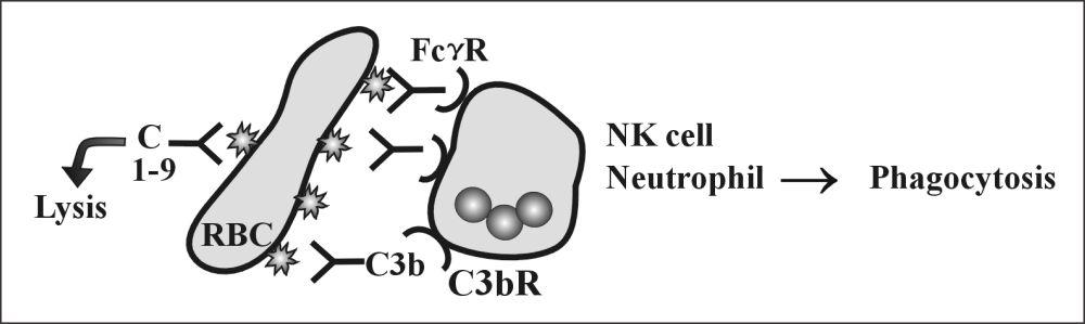 Fig 99: Type II Reaction