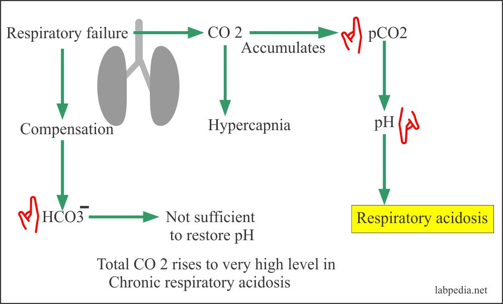 Respiratory acidosis mechanism