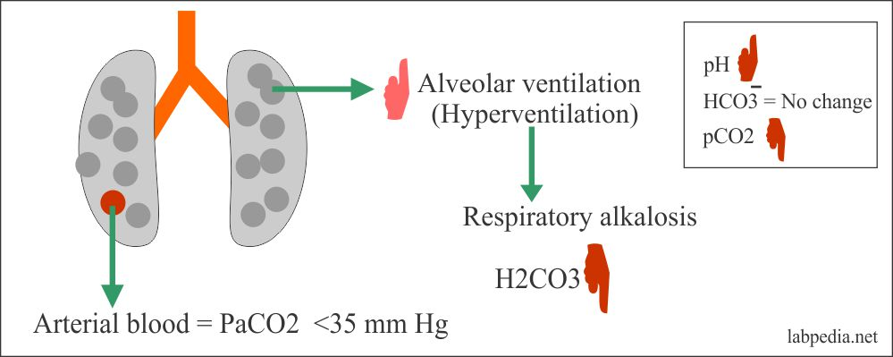Respiratory alkalosis changes
