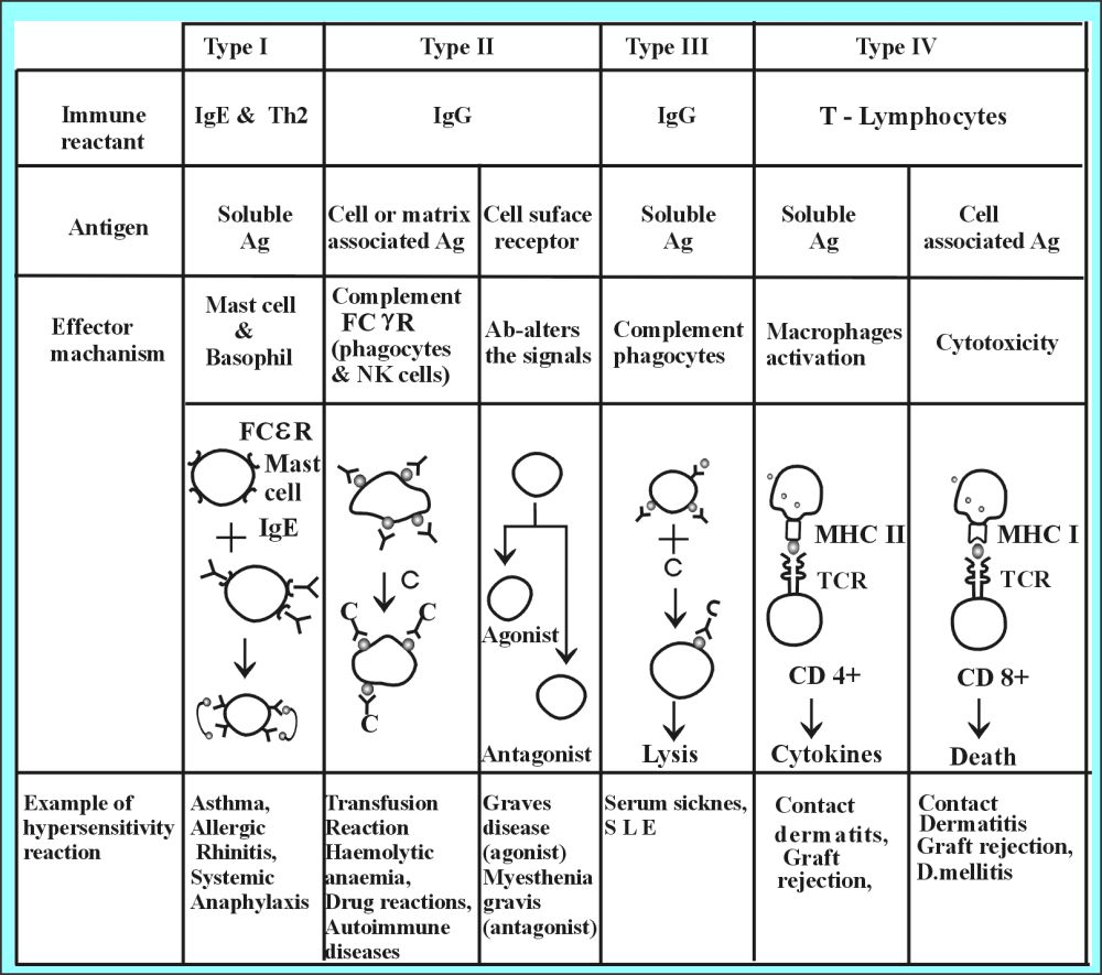 Table XX: Summary of Hypersensitivity Reactions