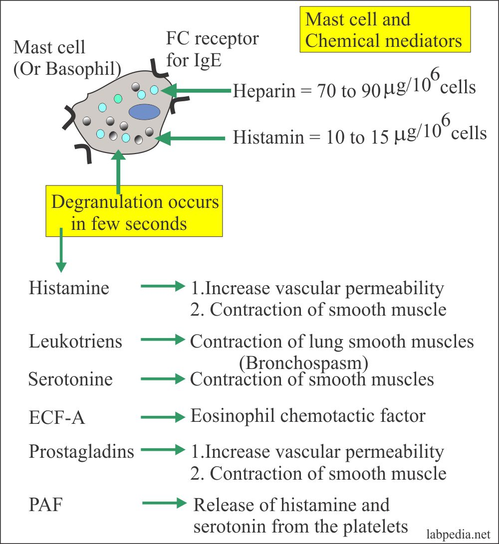 Type 1 Hypersensitivity reaction and Mast mediators