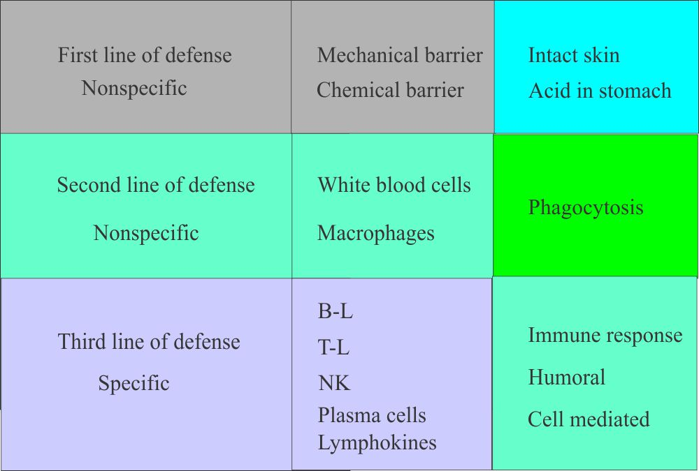 Immunity and line of defense