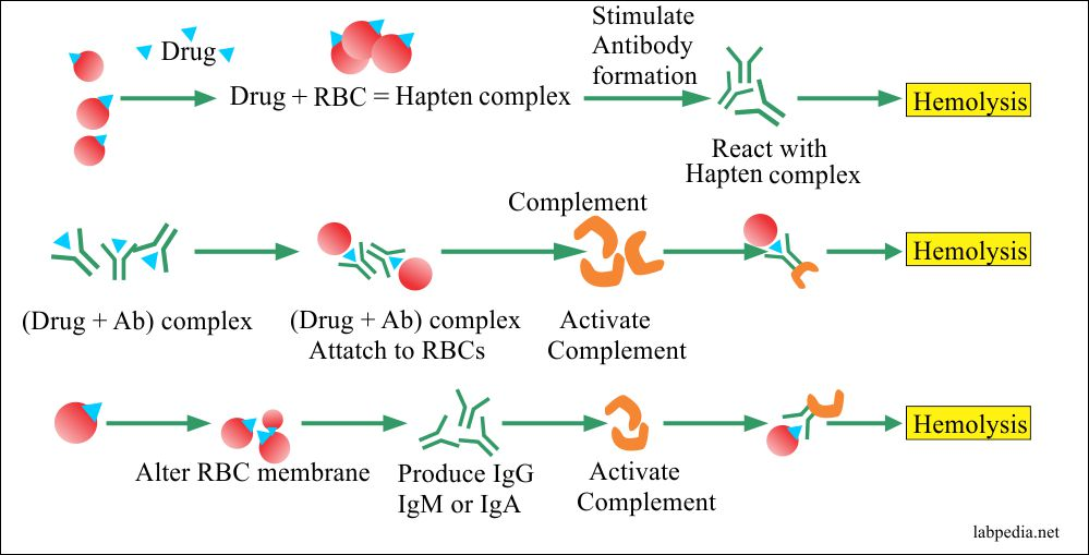 Chapter 27: Autoimmune diseases: Autoimmune Hemolytic Anemia (AHA)