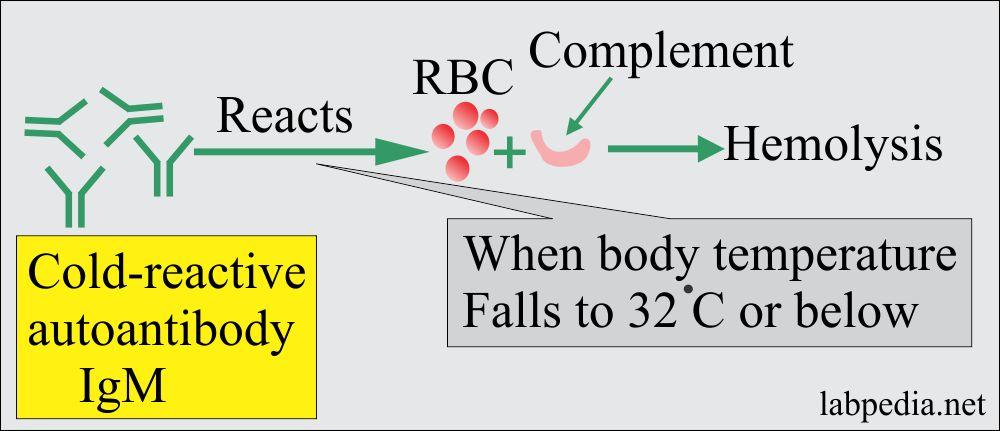 Autoimmune Hemolytic anemia due to cold Antibodies mechanism